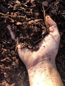 Hand full of Mulch